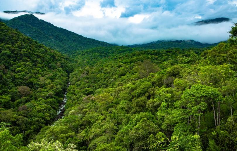 Secretaria do Ambiente e Inea retomam atividades de monitoramento florestal